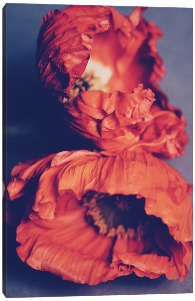 Orange Poppies Canvas Art Print