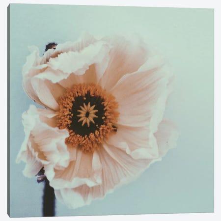 Bloom Canvas Print #MKE82} by Morgan Kendall Canvas Artwork