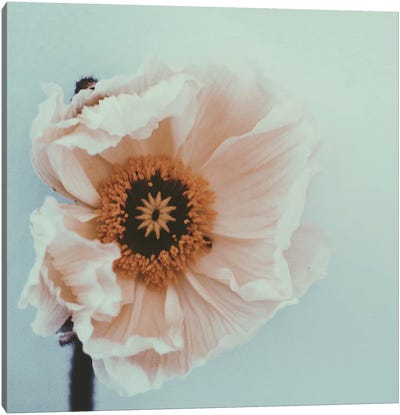 Bloom Canvas Print #MKE82