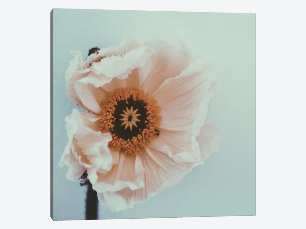 Bloom by Morgan Kendall 1-piece Canvas Art