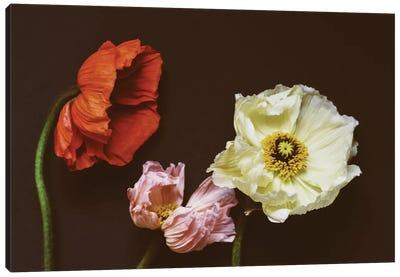 Windblown Canvas Art Print
