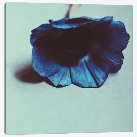 Blue Canvas Print #MKE91} by Morgan Kendall Canvas Print