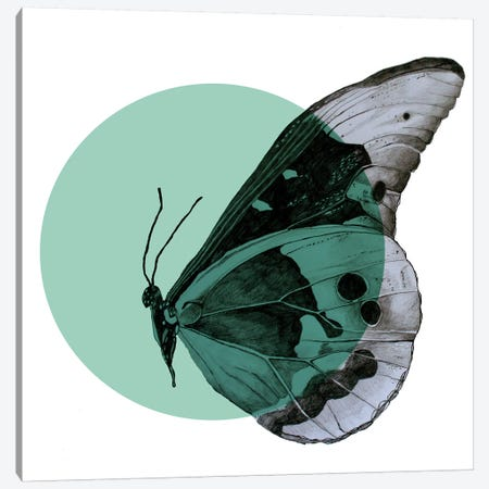 Moth Canvas Print #MKE93} by Morgan Kendall Canvas Print