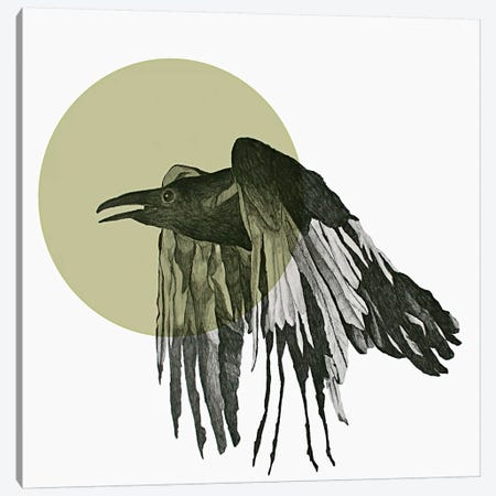 Raven Canvas Print #MKE95} by Morgan Kendall Canvas Wall Art