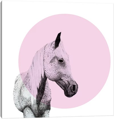 Speckled Horse Canvas Art Print