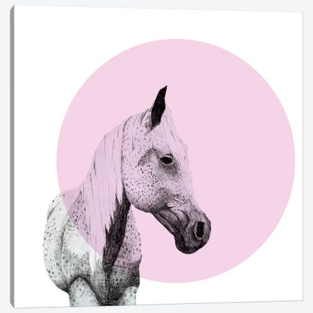 Speckled Horse Canvas Print #MKE98} by Morgan Kendall Art Print