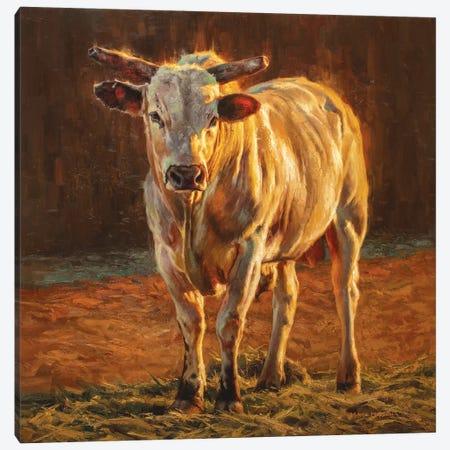 Rodeo Gold Canvas Print #MKM18} by Mark McKenna Canvas Print