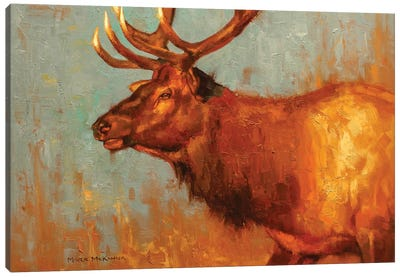 Timber Bull Canvas Art Print