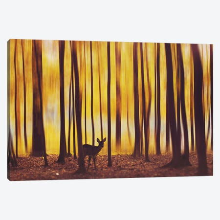 The Deer In The Fog Canvas Print #MKV107} by Hobopeeba Canvas Art Print
