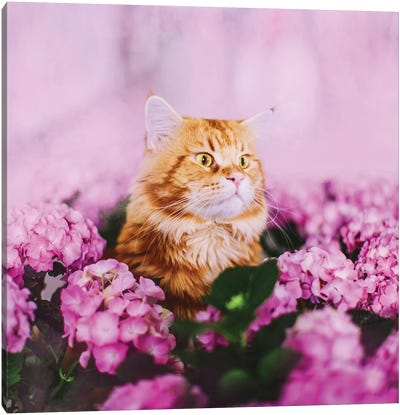 What Canvas Art Print