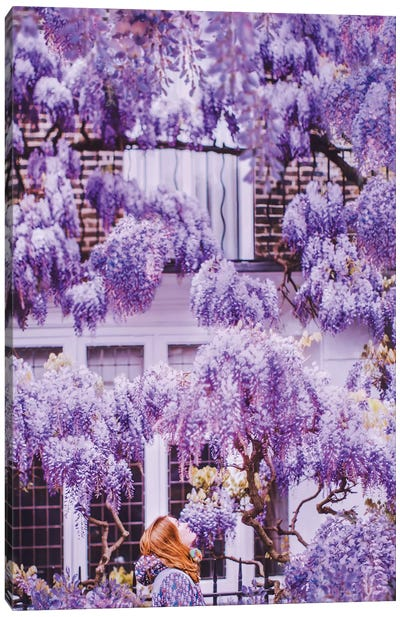 Wisteria In London! Canvas Art Print