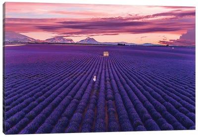 Lavander Sunset Canvas Art Print