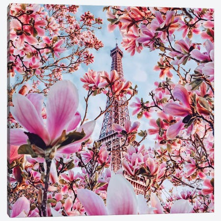 Magnolia Blossom In Paris Canvas Print #MKV164} by Hobopeeba Canvas Art Print