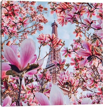 Magnolia Blossom In Paris Canvas Art Print