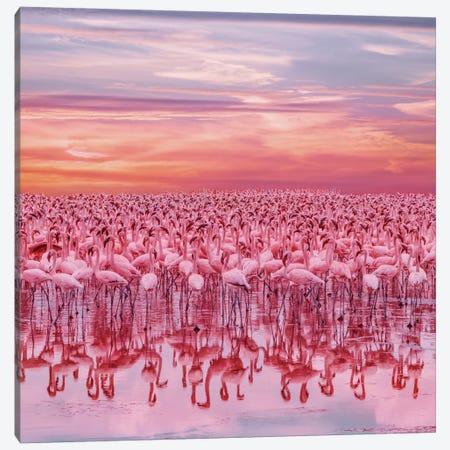 Flamingo's Sunset Canvas Print #MKV184} by Hobopeeba Canvas Art Print
