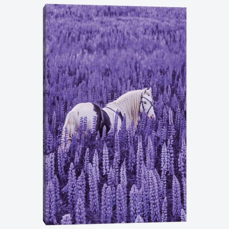 Unicorn Meeting Canvas Print #MKV188} by Hobopeeba Canvas Artwork
