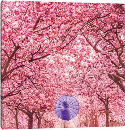 Hanami Season Canvas Art Print