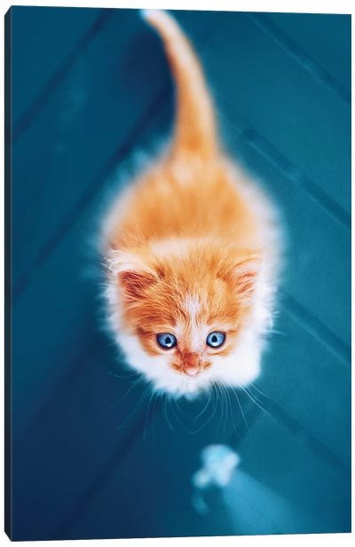 Meow Scarecrow Canvas Art Print