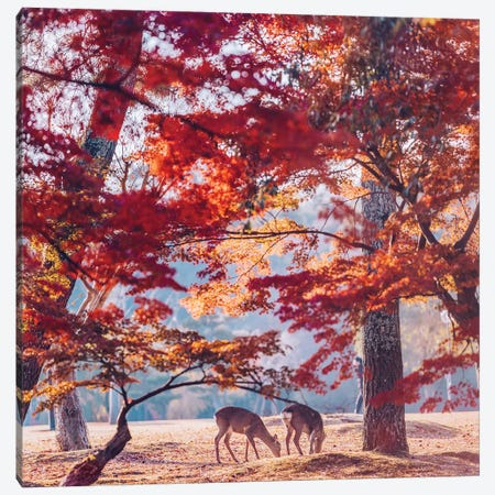 Autumn Sunrise In Nara Canvas Print #MKV7} by Hobopeeba Canvas Print