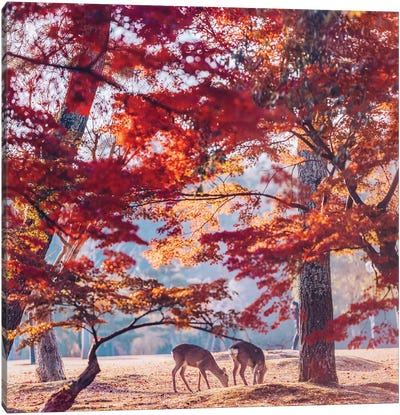 Autumn Sunrise In Nara Canvas Art Print