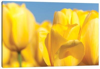 Sunshine Yellow I Canvas Art Print