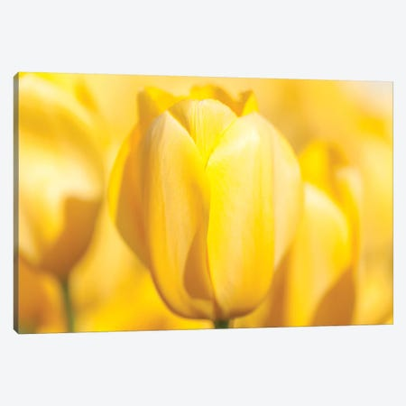 Sunshine Yellow II 3-Piece Canvas #MLM11} by Melissa Mcclain Canvas Wall Art