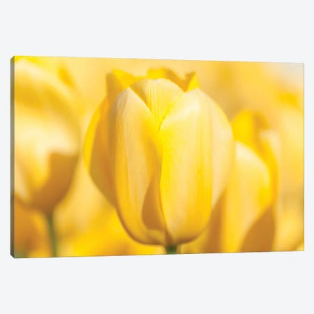 Brilliance Canvas Print #MLM16} by Melissa Mcclain Canvas Art Print