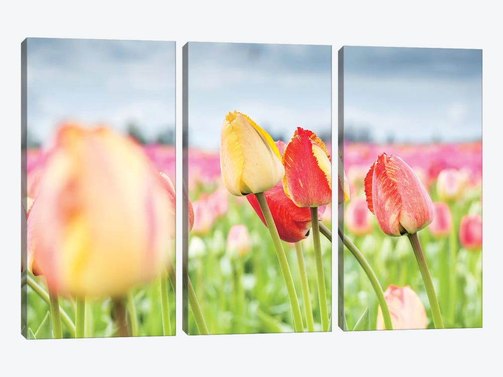 Rosy Field by Melissa Mcclain 3-piece Canvas Print