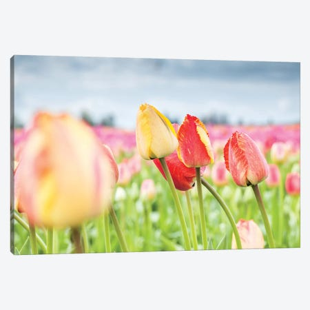 Rosy Field 3-Piece Canvas #MLM8} by Melissa Mcclain Canvas Print
