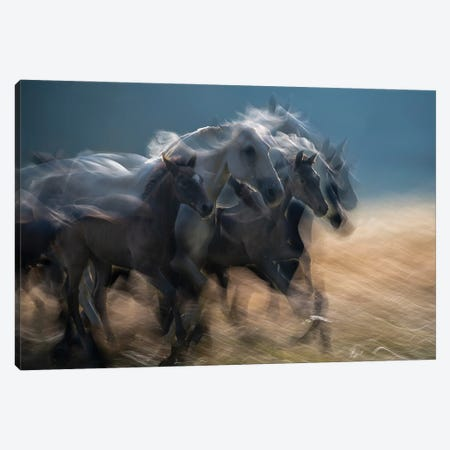 First In Line Canvas Print #MLV6} by Milan Malovrh Canvas Wall Art