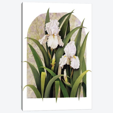 Iris Vignette Canvas Print #MMA16} by Marcia Matcham Canvas Artwork