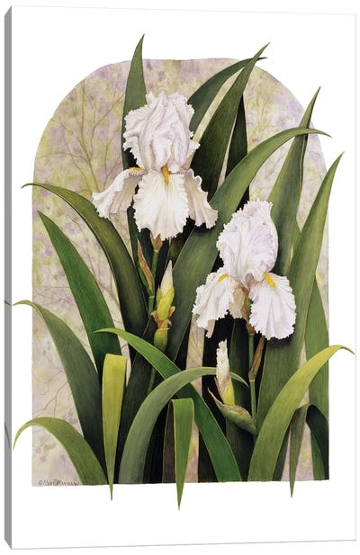 Iris Vignette Canvas Art Print