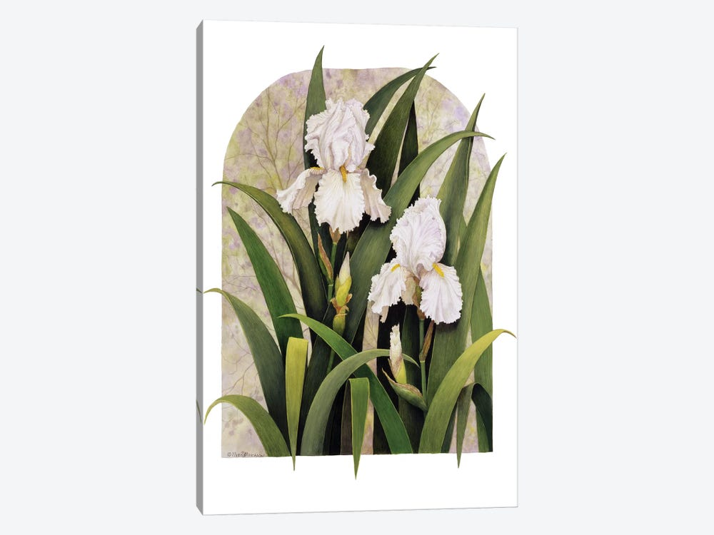 Iris Vignette by Marcia Matcham 1-piece Canvas Artwork