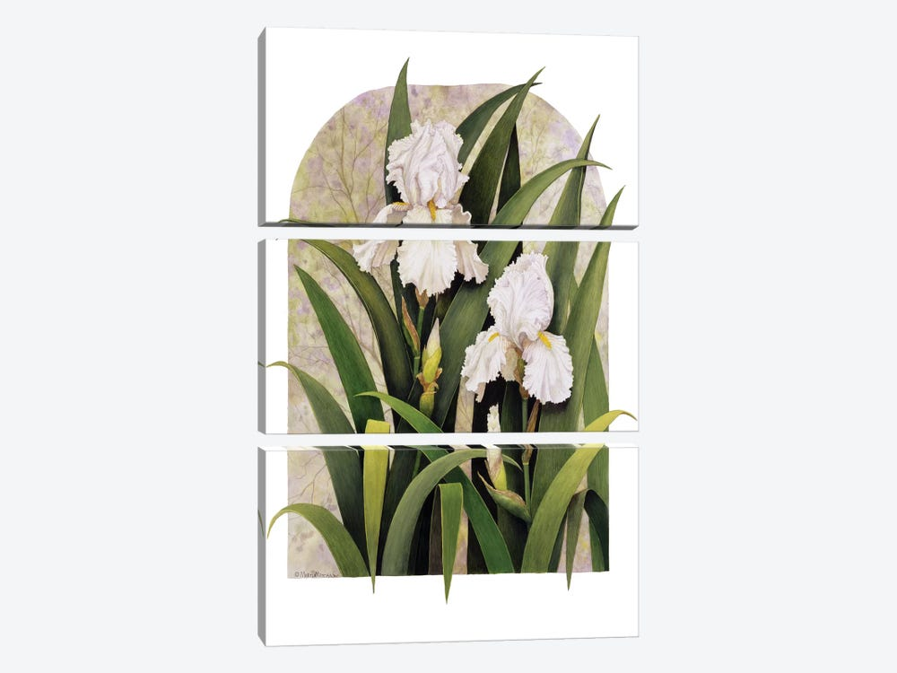 Iris Vignette by Marcia Matcham 3-piece Canvas Art