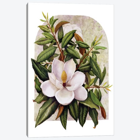Magnolia Vignette Canvas Print #MMA19} by Marcia Matcham Canvas Art Print
