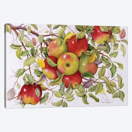 Apples Canvas Print #MMA1} by Marcia Matcham Canvas Artwork