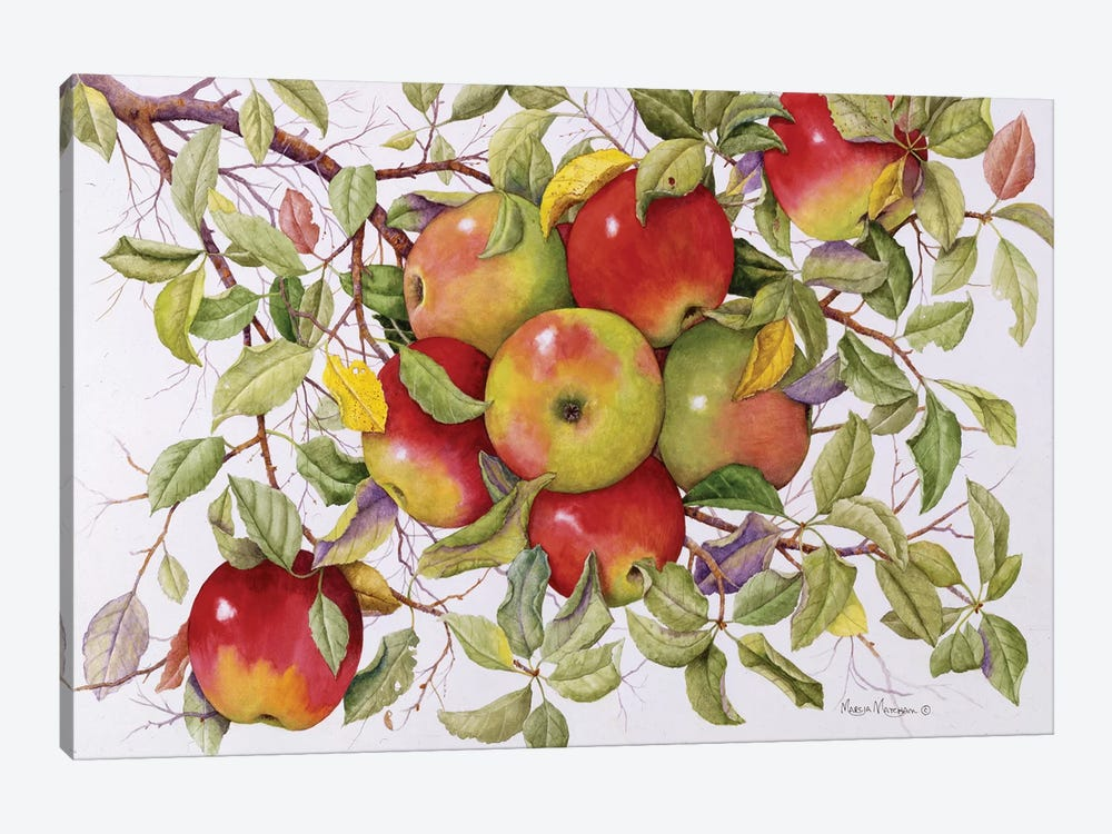 Apples by Marcia Matcham 1-piece Canvas Print