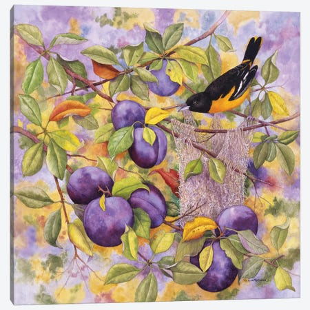 Oriole & Plums Canvas Print #MMA22} by Marcia Matcham Canvas Artwork