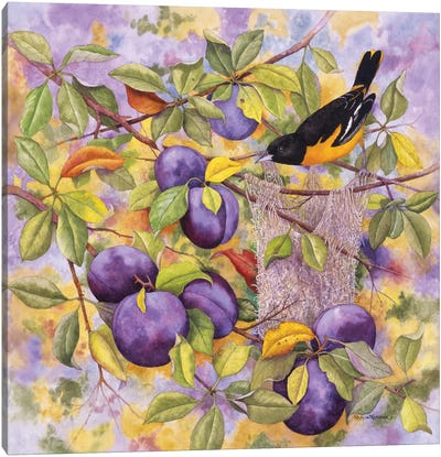 Oriole & Plums Canvas Art Print