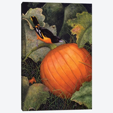 Oriole & Pumpkin Canvas Print #MMA23} by Marcia Matcham Canvas Art