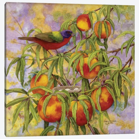 Painted Bunting & Peaches Canvas Print #MMA24} by Marcia Matcham Canvas Print
