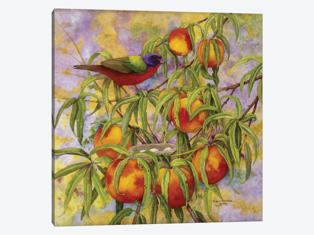 Painted Bunting & Peaches by Marcia Matcham 1-piece Canvas Art Print