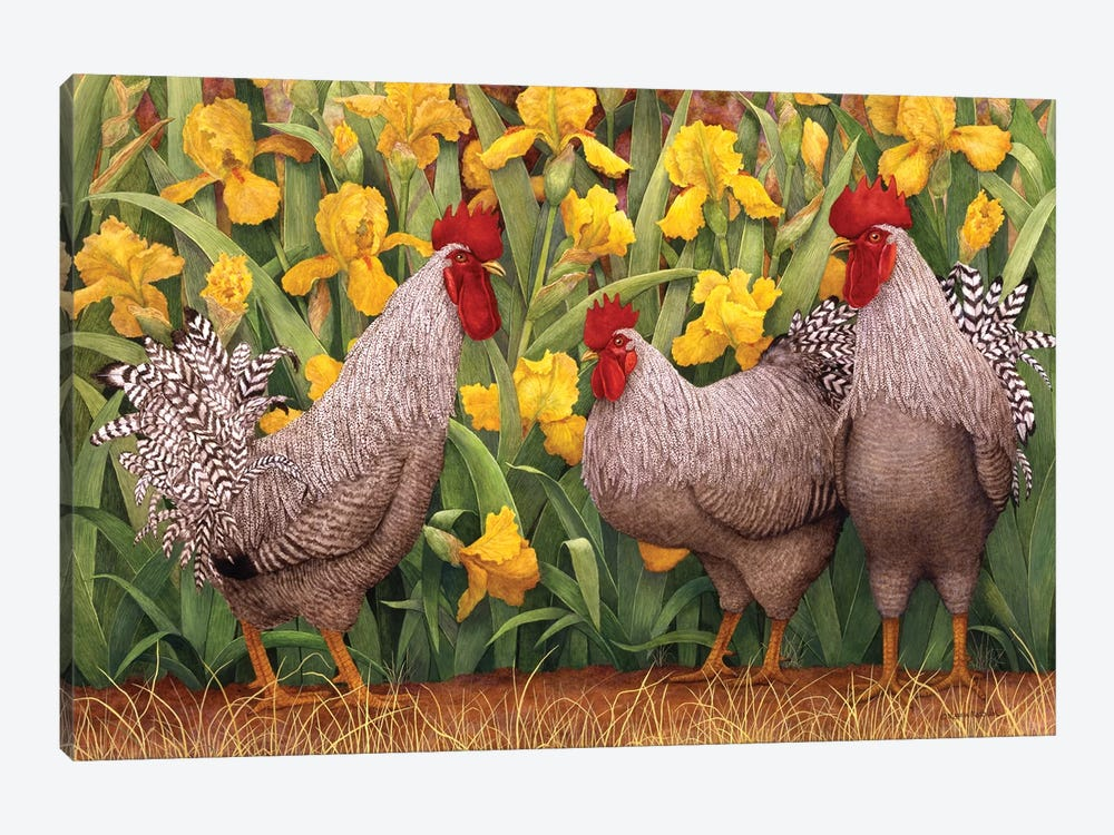 Roosters en Place II by Marcia Matcham 1-piece Canvas Art Print