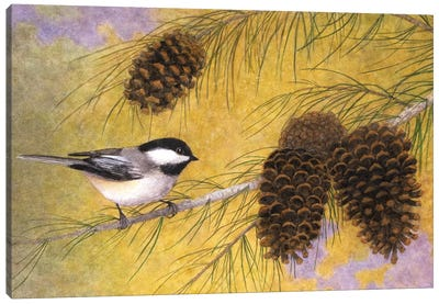Chickadee In The Pines I Canvas Print #MMA4