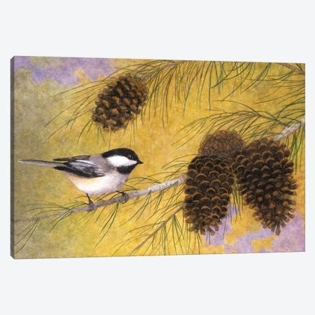 Chickadee In The Pines I Canvas Print #MMA4} by Marcia Matcham Canvas Print