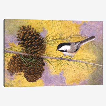 Chickadee In The Pines II Canvas Print #MMA5} by Marcia Matcham Art Print