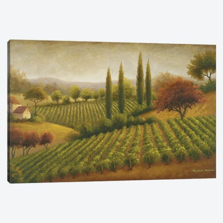 Vineyard In The Sun I 3-Piece Canvas #MMC149} by Michael Marcon Canvas Print