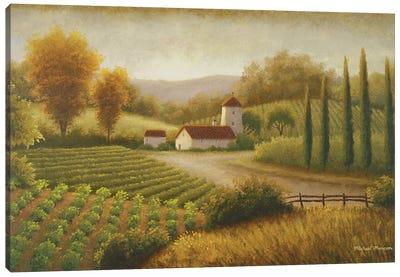 Vineyard In The Sun II Canvas Art Print