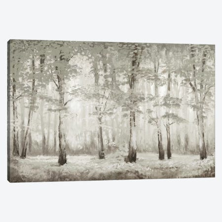 Misty Woodland Glow Canvas Print #MMC95} by Michael Marcon Canvas Wall Art