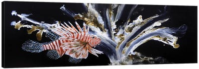 The Lionfish Canvas Art Print